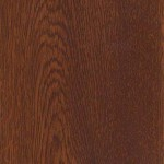 0104 birch tree